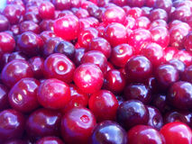 Cherries. Are a great crop. A good photo that can be used to create banners, billboards, packages for various products such as juices,jam Stock Photography