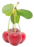 Cherries with Green Leaf Stock Image