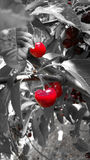 Cherries on grey background Royalty Free Stock Images