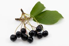 Cherries. Group of cherries isolated to background stock images