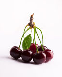 Cherries group on white background. Cherries group branch on white background Stock Photography