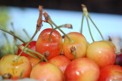 Cherries. An grouping of cherries by a local vendor royalty free stock photography