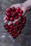 Cherries in hand Stock Photos