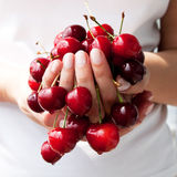 Cherries in hand Royalty Free Stock Images