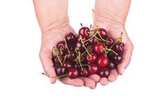 Cherries in hands Stock Photos