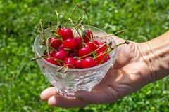 Cherries on hands Stock Photography