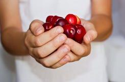 Cherries in hands. Ripe red cherries in children's hands Royalty Free Stock Images