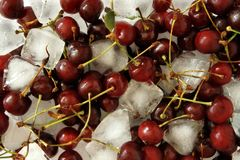 Cherries with ice Stock Images