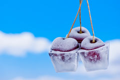 Cherries in ice cubes Royalty Free Stock Images