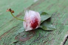 Cherries in ice. Frozen fruits. Stock Images