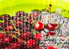 Cherries immersed in water Stock Photography