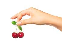 Free Cherries In Hand Stock Photography - 25245802