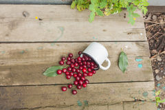 Cherries in an iron cup Stock Image