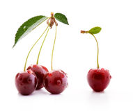 Cherries isolated on white background Stock Images
