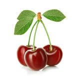 Cherries isolated on white Royalty Free Stock Photography