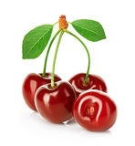Cherries isolated on white Royalty Free Stock Photo
