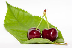 Red cherries on a green leaf, white background. A couple of red cherries on a green leaf, with white background Stock Photography