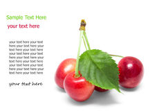 Cherries with the leaf on a white . Royalty Free Stock Photo