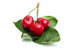 Cherries on the leafs Stock Photos