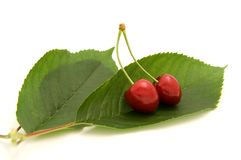 Cherries on the leafs. Isolated on white background Royalty Free Stock Photo