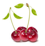 Cherries with leaves Stock Images
