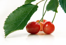 Cherries with leaves close up Royalty Free Stock Photography