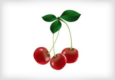 Cherries with leaves Royalty Free Stock Photography
