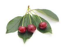 Cherries with leaves. Stock Image
