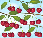 Cherries on light blue Royalty Free Stock Photos