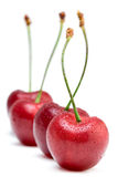 Cherries lined up Royalty Free Stock Images