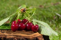 Cherries on log Stock Photos