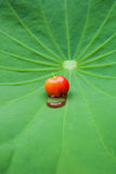 Cherries on a lotus leaf. Royalty Free Stock Image