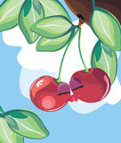 Cherries in love. Vector illustration of cherrises in love Stock Photo
