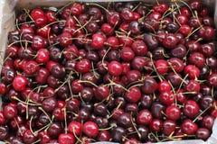 Cherries in a Market Bin Royalty Free Stock Image