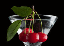 Cherries in a martini glass. Stock Photography