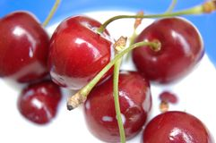 Cherries in milk. Cherries swimming in milk Stock Photo