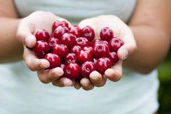 Cherries offer horizontal Royalty Free Stock Photos