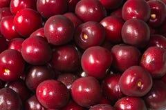 Cherries passion stock photo