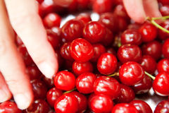 Cherries in the plate Royalty Free Stock Photography