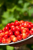 Cherries in the plate Royalty Free Stock Photos