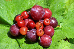 Cherries and plums. On grape leaves Stock Photography