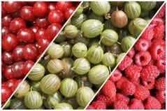Cherries, raspberries and gooseberries Stock Image