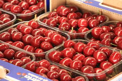 Cherries seasonal fruit farming Emilia Romagna Italy. Cherries Peaches plums seasonal fruit farming Emilia Romagna Italy stock photography