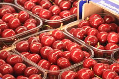 Cherries seasonal fruit farming Emilia Romagna Italy. Cherries Peaches plums seasonal fruit farming Emilia Romagna Italy royalty free stock photography