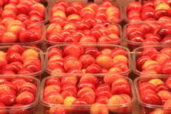 Cherries seasonal fruit farming Emilia Romagna Italy. Cherries Peaches plums seasonal fruit farming Emilia Romagna Italy stock images