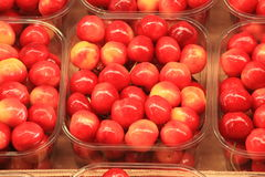 Cherries seasonal fruit farming Emilia Romagna Italy Stock Images