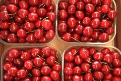 Cherries seasonal fruit farming Emilia Romagna Italy Royalty Free Stock Photo