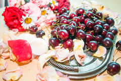 Cherries on a silver tray with rose petals royalty free stock photo