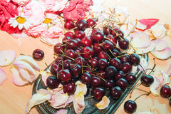 Cherries on a silver tray with rose petals royalty free stock images