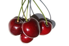 Cherries with stems. Four red cherries in the sun royalty free stock photos